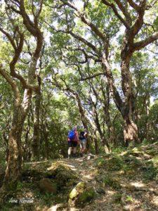 Progression dans une belle suberaie, forêt de chênes lièges